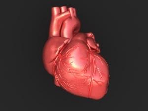 000-3d-model-human-heart-01